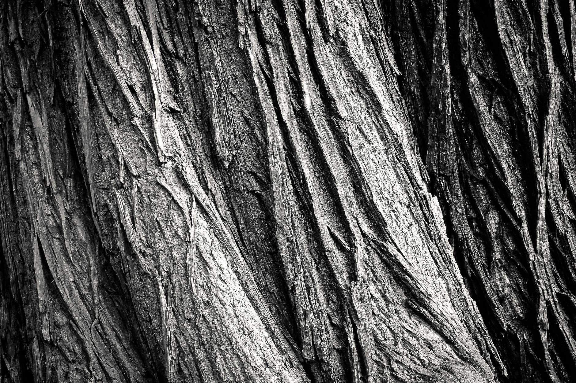 bark black and white hardwood oak