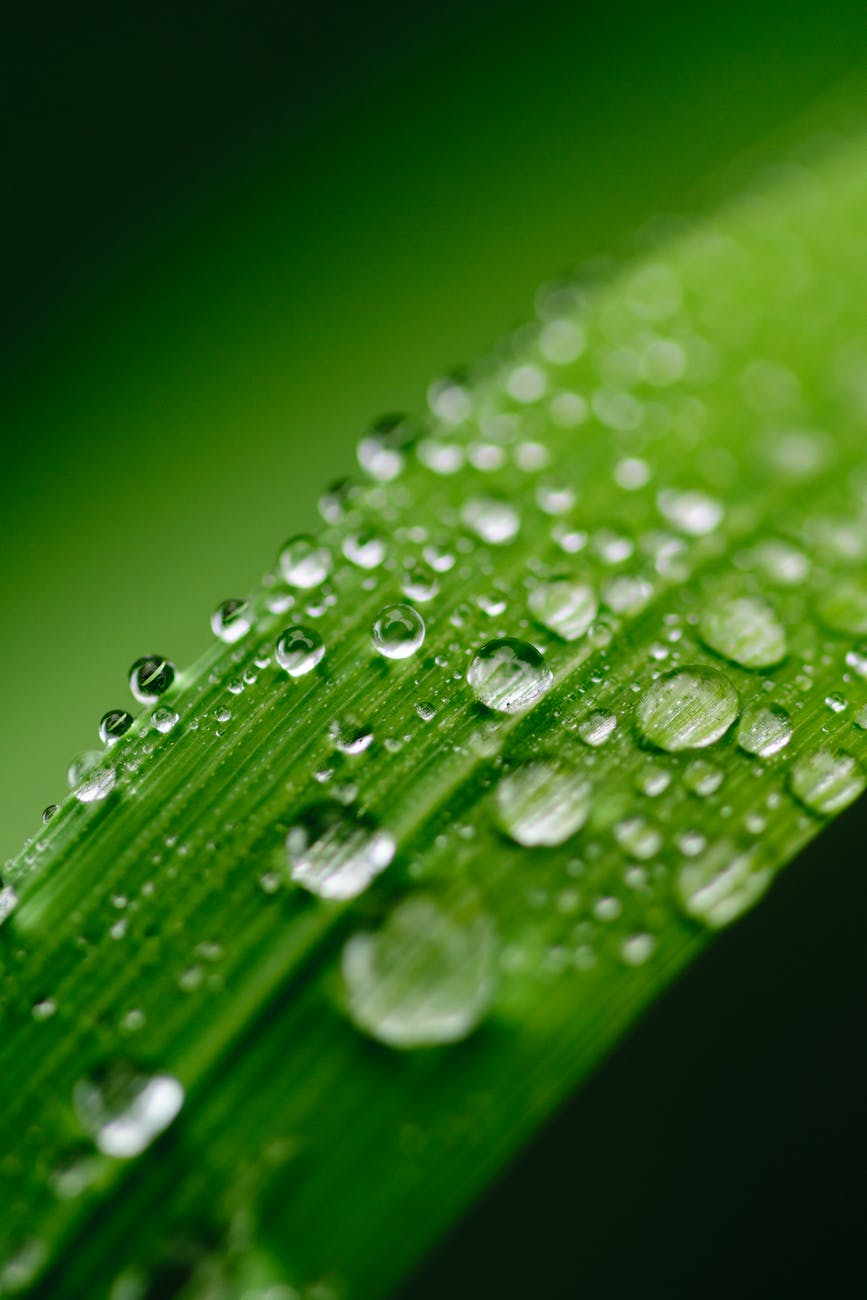 focus photography of green leaf with water droplets