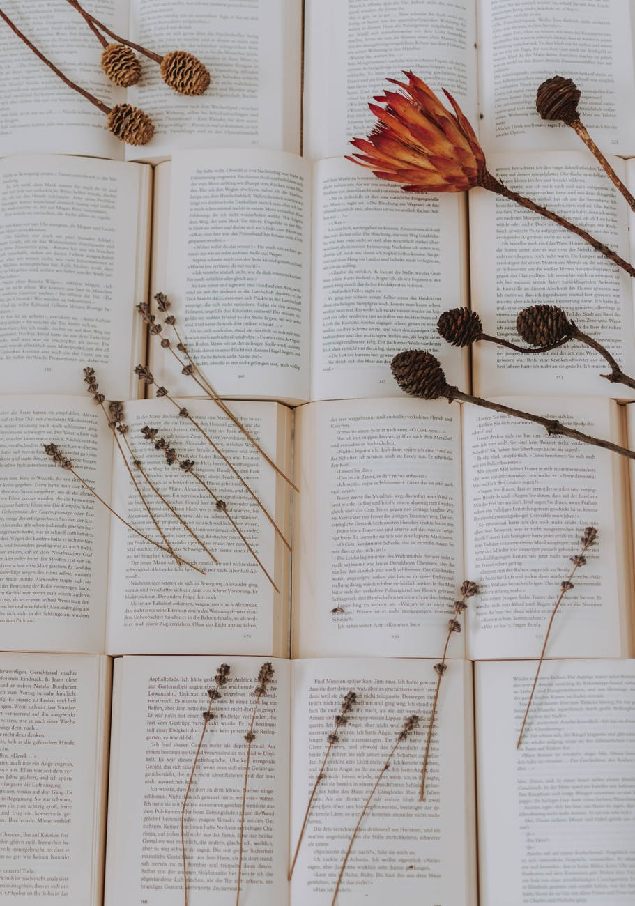 photo of dried pin cones on top of books