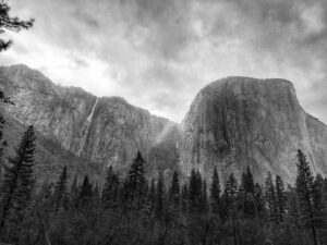 grayscale photo of cliff and pine trees
