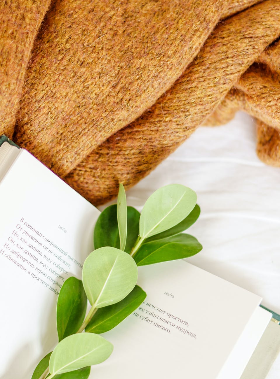 open book with green plant stem near soft fabric