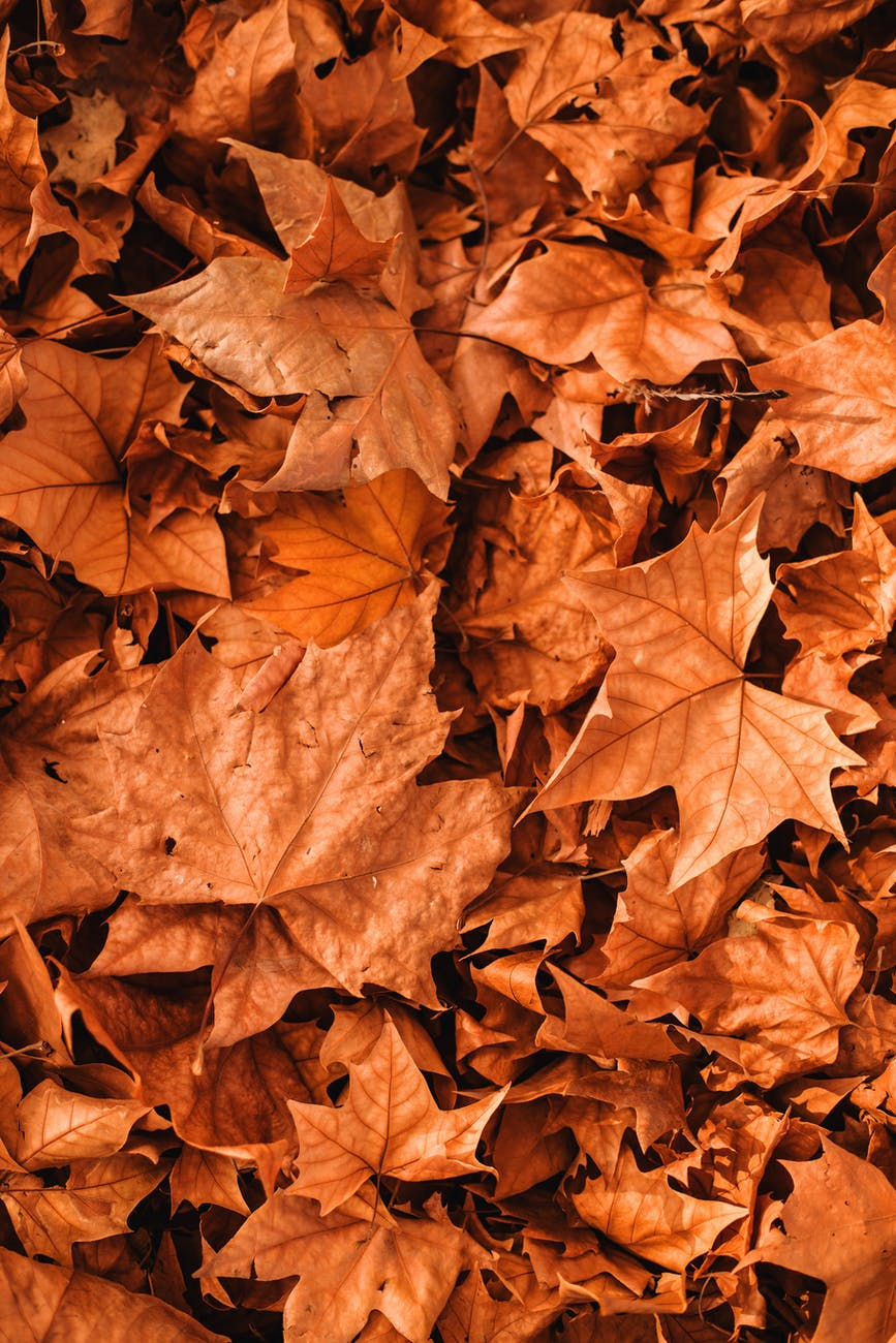 vivid autumn leaves scattered on ground